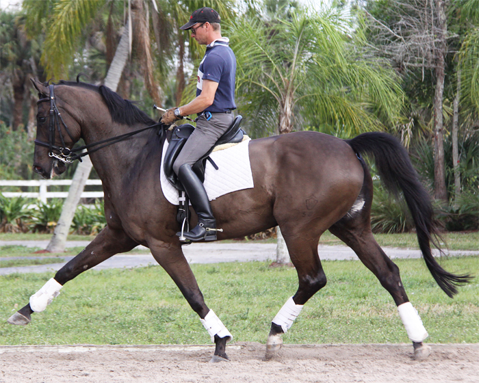 Home Empire Marcel Sport Horse Sales and Dressage Training ...