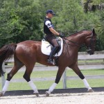 Aladdin for sale danish warmblood dressage